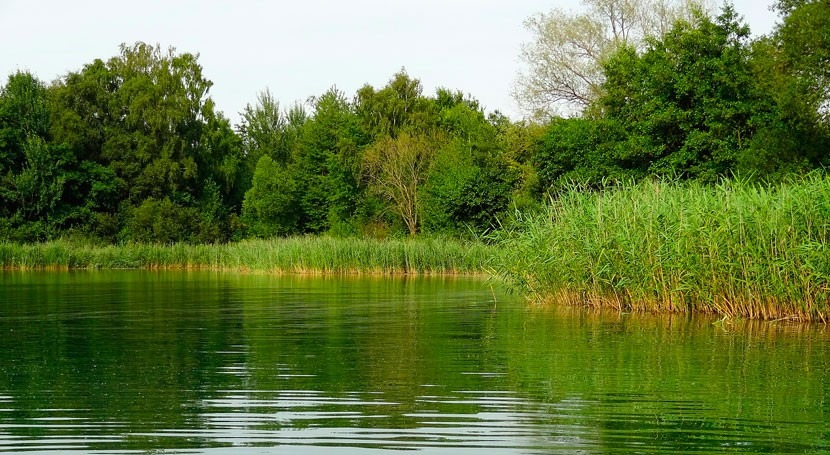 Great Lakes and St. Lawrence Cities Initiative and TruGreen partner to improve water quality