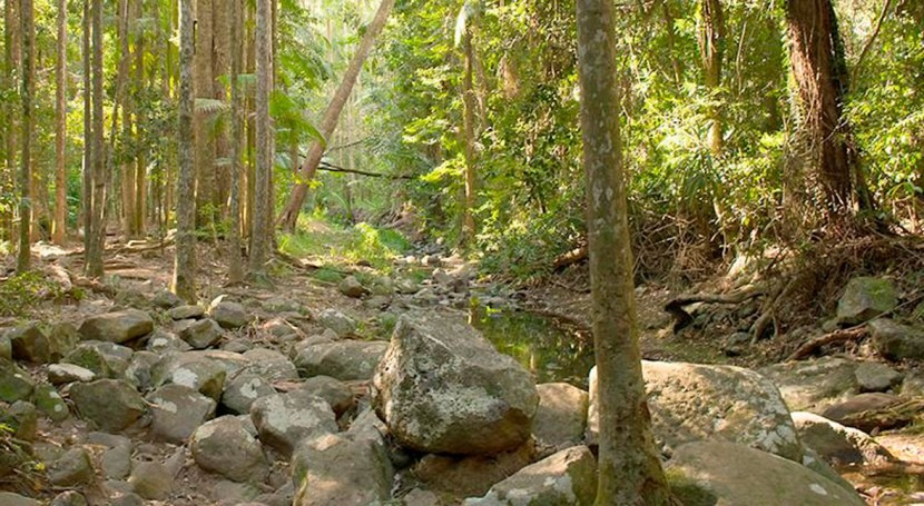 Local water availability is permanently reduced after planting forests