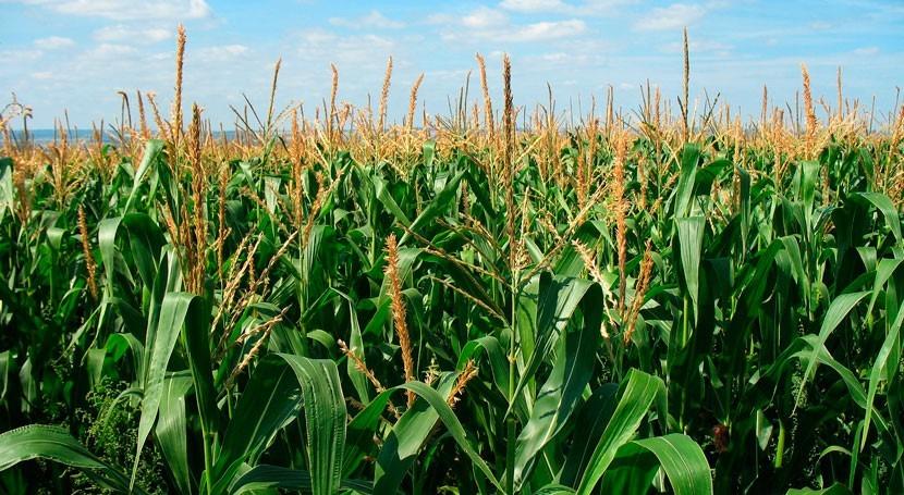 Overexpression transcription factor in plant improves drought tolerance