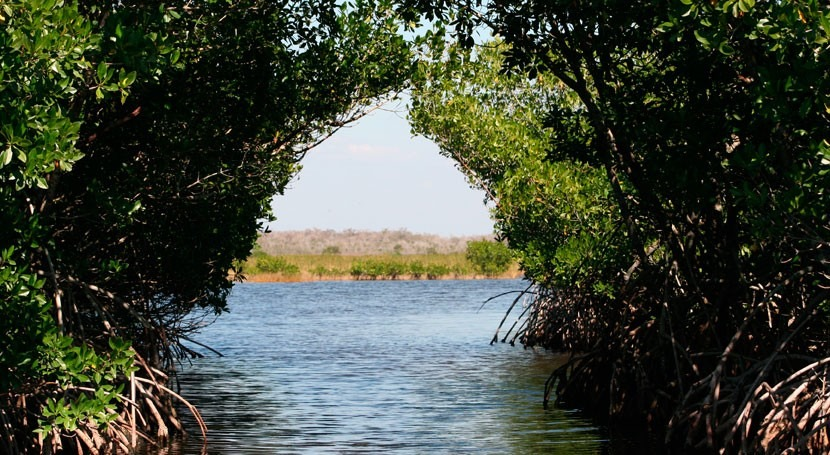 Florida mangroves reveal complex relationship between climate and natural systems