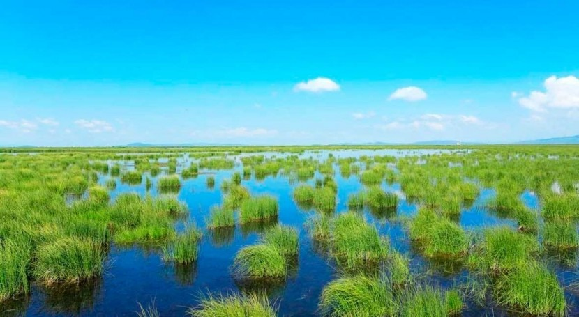 Marshland conversion can warm land surface