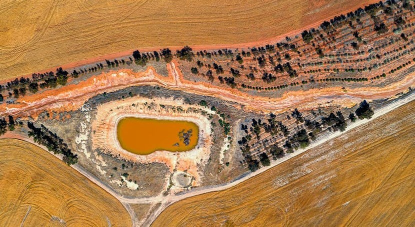 We found history of megadroughts in tree rings. The wheatbelt's future may be drier than thought