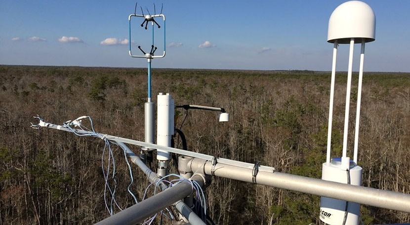 How coastal forests are managed can impact water cycle