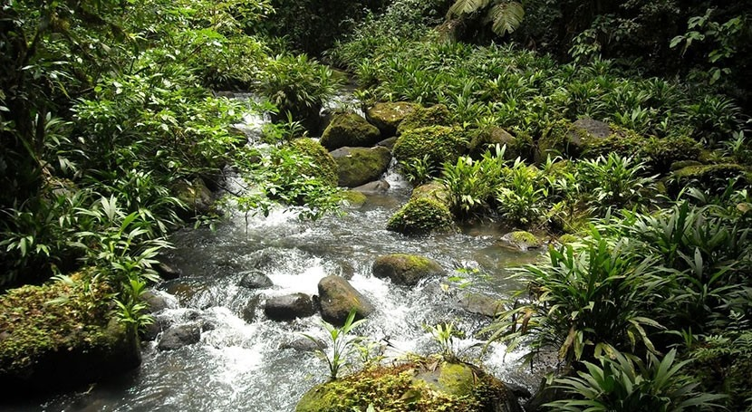 Study: Fertilizer runoff in streams and rivers can have cascading effects