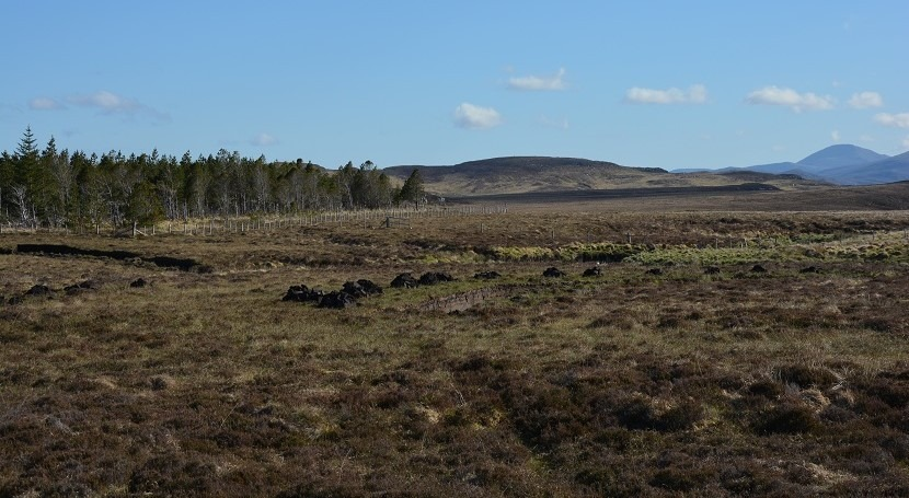 Vital peatlands to be restored to help tackle climate change and protect biodiversity