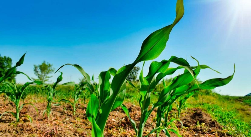 New satellite-based algorithm pinpoints crop water use