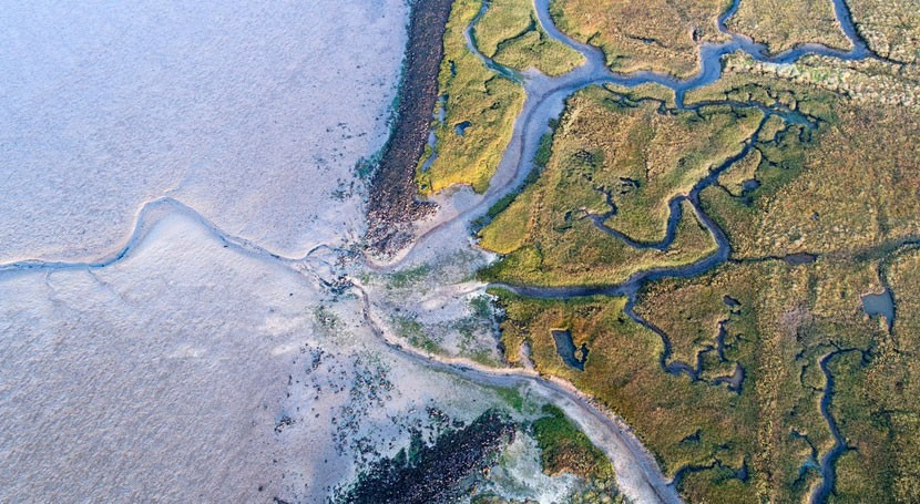 Producing electricity at estuaries using light and osmosis
