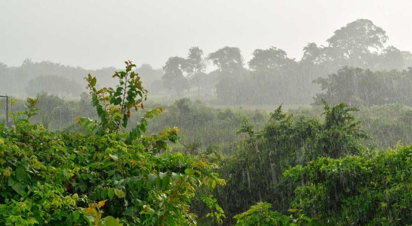 Study shows wetter climate is likely to intensify global warming