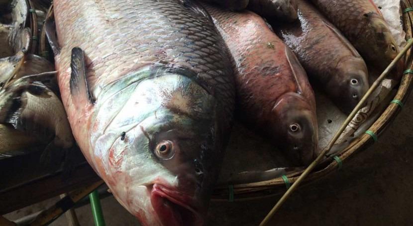 Thailand designates Lower Songkhram River