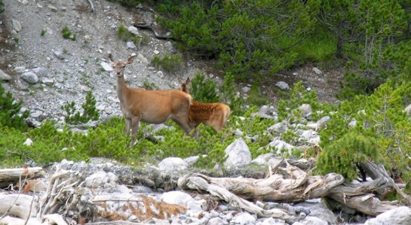Rewilding must enable ecosystems to become self-sustaining