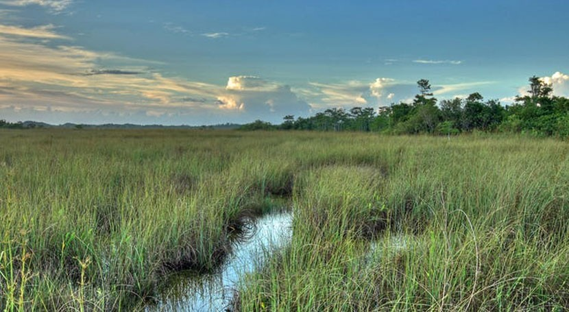 Climate change alters what's possible in restoring Florida's Everglades