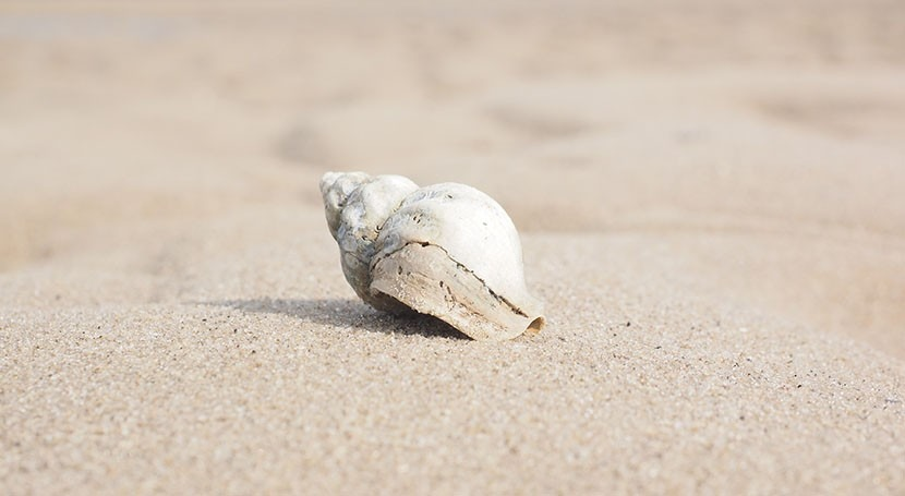 Researchers advocate using seashells to monitor pollution from desalination plants
