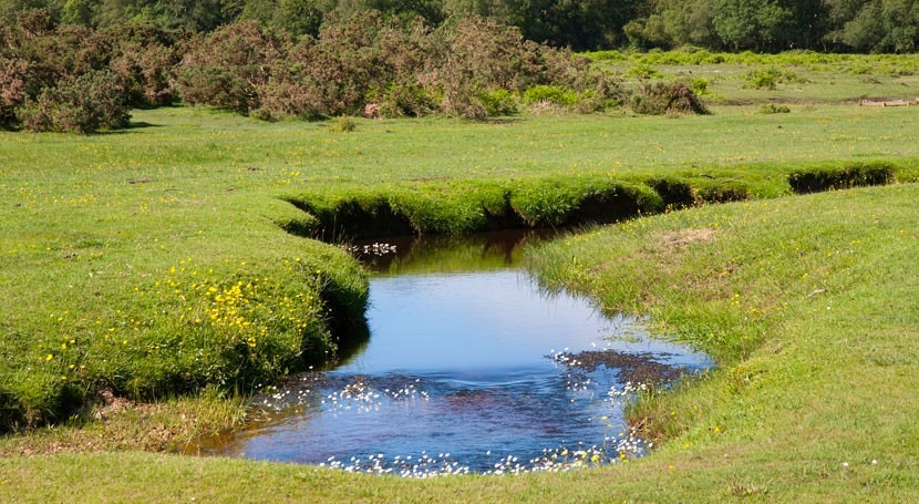 Pollution control of rivers can reduce impact of climate warming