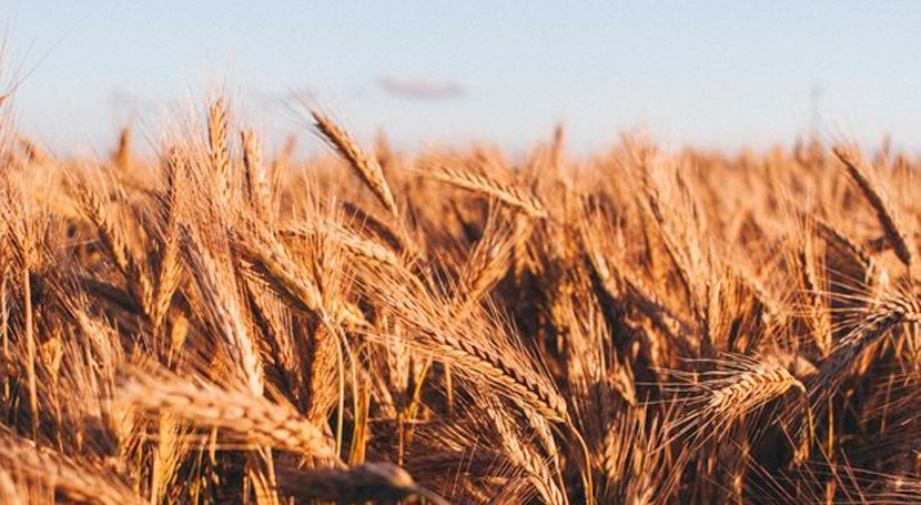 Without adaptation to climate change, 25% of global crop yields at risk