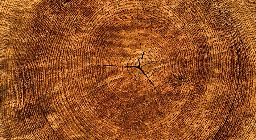 Tree rings show water loss limits global forest growth