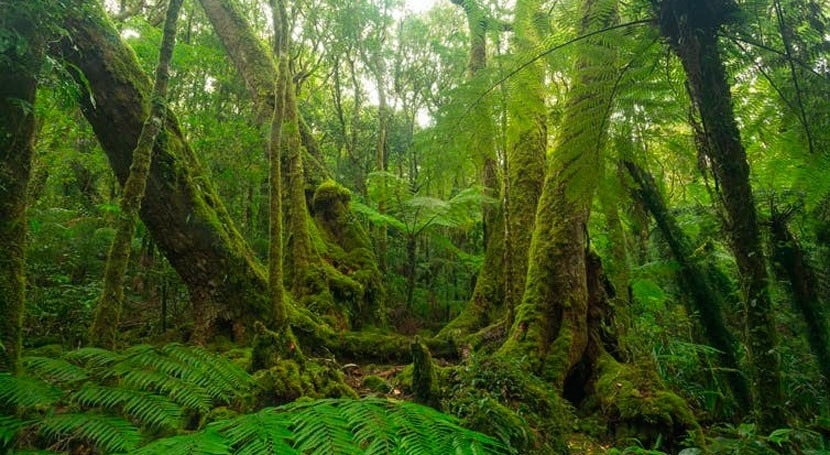 The Wet Tropics' wildlife is celebrated worldwide. Its cultural heritage? Not much
