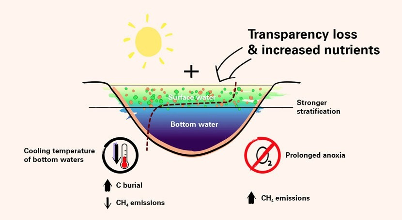 Warm on top, cold below: unexpected greenhouse gas effect in lakes