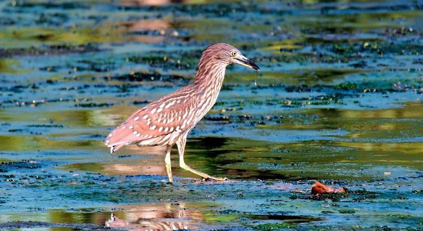 Unexpected culprit – wetlands as source of methane