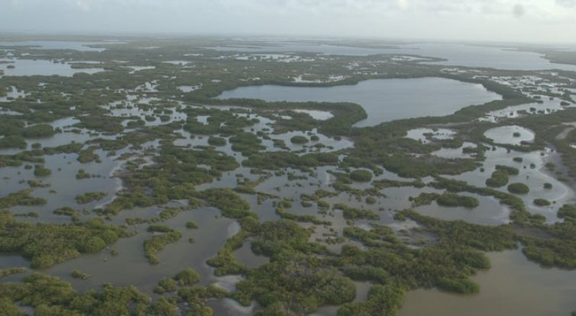 Protecting mangroves can prevent billions of dollars in global flooding damage every year