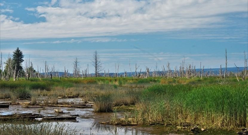 Invest in wetlands to combat climate change
